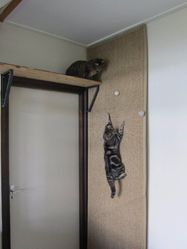 15 Smart DIY Ways To Keep Your Cat Entertained In Your Home